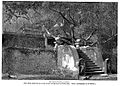 Jaya Sri Maha Bodhi in 1891.jpg