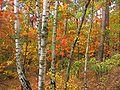 Jesienny.jpg