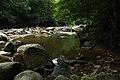 Jingualiao Stream Fish and Fern Trail (坪林金瓜寮魚蕨步道) - panoramio (4).jpg