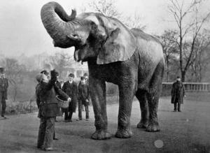 象のジャンボ (1882年頃) ジャンボ(Jumbo、 1861年 -...  Wikipedi