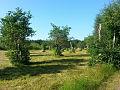 Jungfruskär pastures, Parainen, Finland.jpg