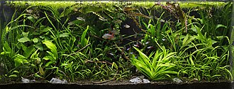 Aquascaping - Jungle style aquascape