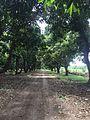 Jungle walk 2.jpg