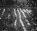 K.K.K. parade, 1925 npcc 14031.jpg