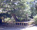 Kaidanin 200607050440.JPG