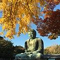 Kamakura Daibutsu (Great Buddha Of Kamakura) ,Kamakura , Kanagawa Prefecture, Japan - panoramio.jpg