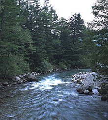 Kamikochi Riverbed in Forest.jpg