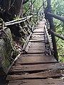 Kanneliya Rainforest.jpg
