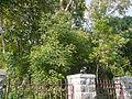 Kari-vepa-chettu (Telugu- కరివేపచెట్టు) (4666862544).jpg