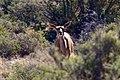 Karoo National Park 2014 37.jpg