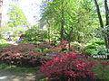 Keukenhof Garden (52).JPG