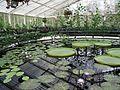 Kew Gardens 0387.JPG