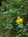 Kitsurifune 06f5392.jpg