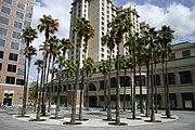 Kluft-photo-Circle-of-Palms-San-Jose-April-2008-Img 0778