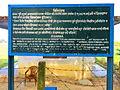 Koṇāgamana Buddha Ashoka (2).JPG