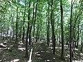 Koritata protected area, Varvara, Bulgaria 01.JPG