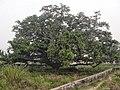 Kosli, Haryana 123302, India - panoramio (8).jpg