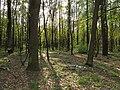 Krasnyy Khutir forest5.jpg