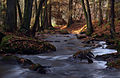 LSG Bayerischer Wald1 Otterbach Christine Landes.jpg