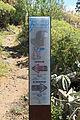 La Palma - El Paso - Barranco de Tenisque - Grabados rupestres de La Fayana y El Cementerio 05 ies.jpg