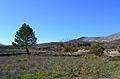 La Vall d'Alcalà, arbres.JPG
