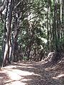 Laguna grande bosque.jpg
