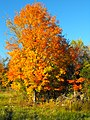 Lanark County Fall Scene - panoramio.jpg
