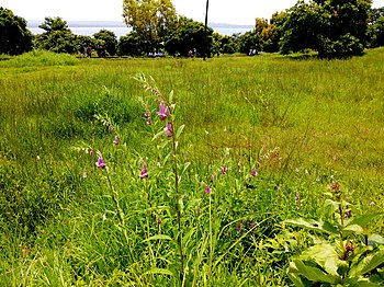Landscape in fort aguada.jpg