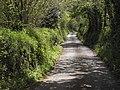 Lane to Moretonhampstead - geograph.org.uk - 1293045.jpg