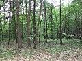 """Las w okolicach rezerwatu """"Dziki Staw"""" na Grobli - panoramio - rytwiany.jpg"""