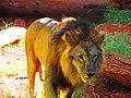 Leão - panoramio (4).jpg