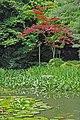 Le jardin du sanctuaire shinto Heian-Jingu (Kyoto, Japon) (29194418998).jpg