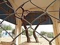 Le reste de l'arbre du Ténéré au musée national du Niger.jpg