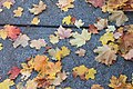 Leaves on the Pavement (6278255084).jpg