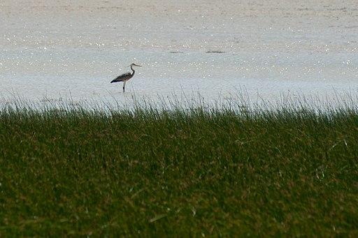Les Oiseaux du Parc National d'Ichkeul