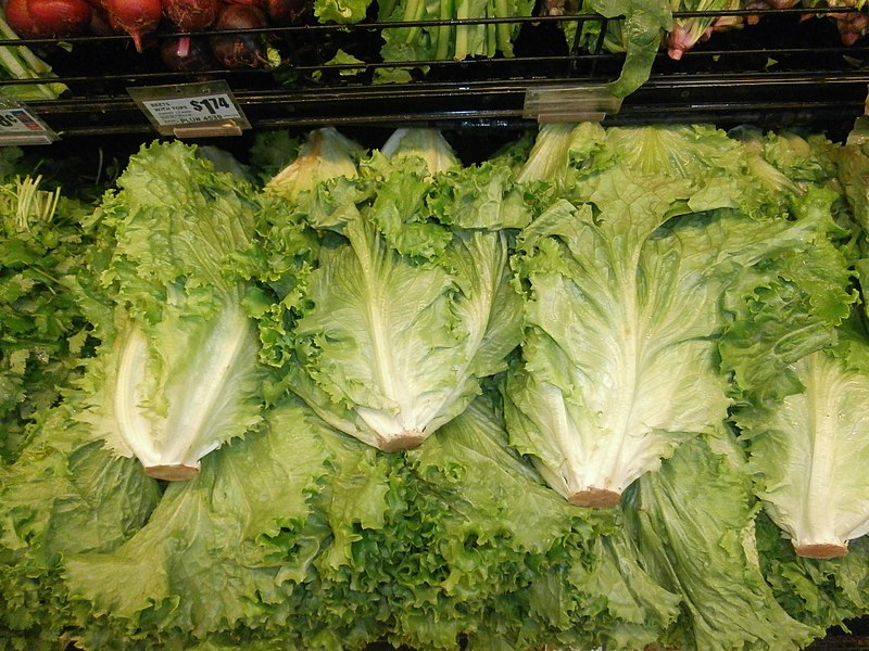 File:Lettuce stack wide.jpg