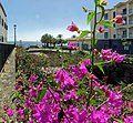 Leuchtende Blumen über den Flüssen von Santa Cruz, Madeira.jpg