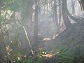 Lightning Fires at Buckhead Mountain-104, Willamette National Forest (34890089705).jpg