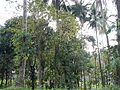 Liliw,Lagunajf5671 03.JPG