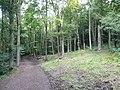 Linacre - Beech Wood - geograph.org.uk - 546514.jpg