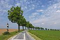 Lindenallee entlang der Landesstraße 8128 03 2016-05 NÖ-Naturdenkmal WT-071.jpg