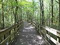 Little River Trail 14, Reed Bingham Park.JPG