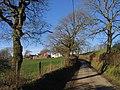 Llwyn- merch- Gwilym - geograph.org.uk - 683500.jpg