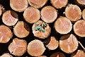 Logs, Saint Just d'Avray, France (14747825325).jpg