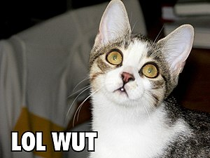 "LOL - A lolcat using ""LOL"""