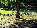 London, Woolwich, Shrewsbury Park05.jpg
