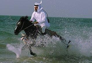...na arabskom plnokrvníkovi...