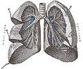 Lungs open.jpg