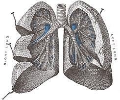 cor pulmonar cie 10