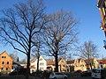 Luthereiche Trachau Winter (1).jpg